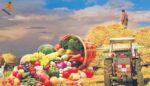 Türkiye'de Tarım Ürünleri & İthalatı