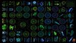 Biyolüminesans : Işık Saçan Canlılar nedir?
